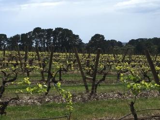 Stonier Winery
